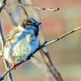 Inquiétude pour les oiseaux, les chauves-souris ou les saumons