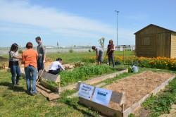 Portes ouvertes au jardin le 29 mai gratuit et ouvert for Au jardin des amis